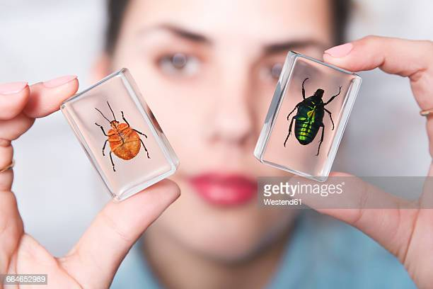Woman showing preparation of brown mint leaf beetle and rose chafer in acrylic