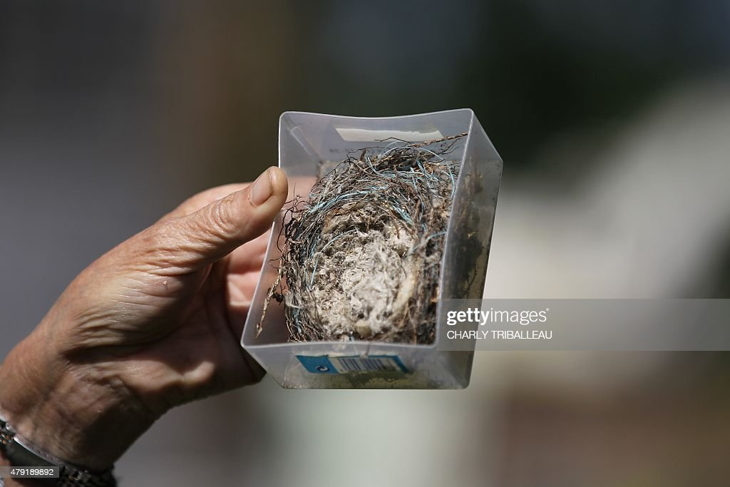 COUPEAU A woman shows a bird nest made with asbestos on June 17 2015 in Caligny northwestern France near an asbestos removal site AFP PHOTO/CHARLY...