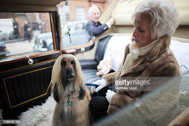 A woman sits with her pet dog in the back of a classic Rolls Royce car before a centenary parade on February 6 2011 in London England Rolls Royce is...