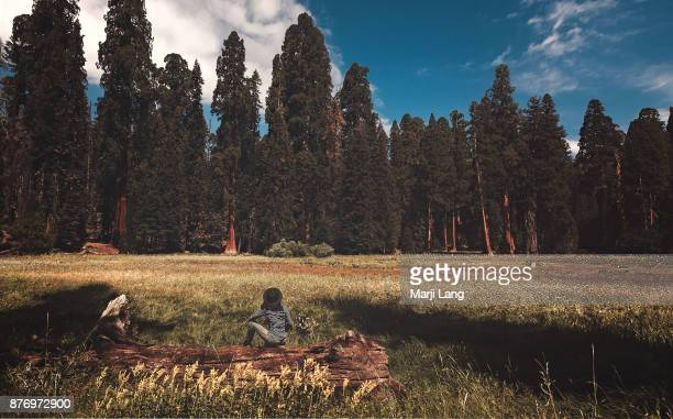 Woman sitting on a tree trunk in the middle of a meadow in Sequoia National Park California USA