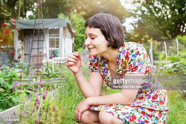 Woman smelling lavender in allotment.