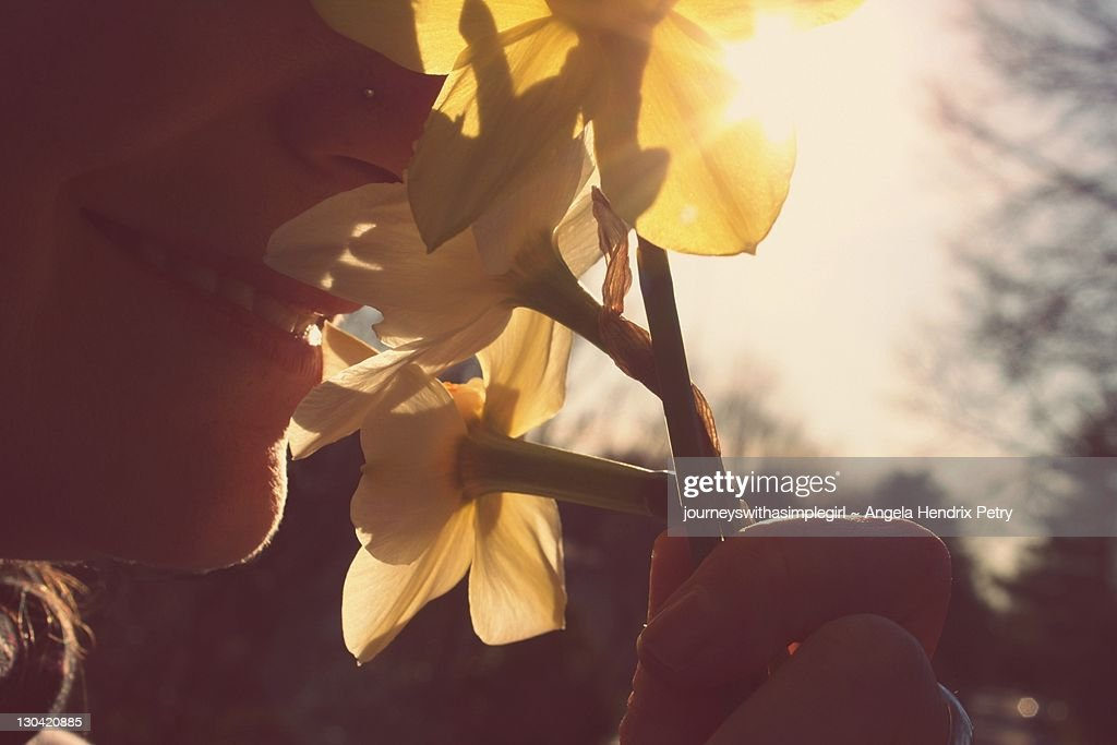 Woman smiling and smelling spring daffodils : Stock Photo