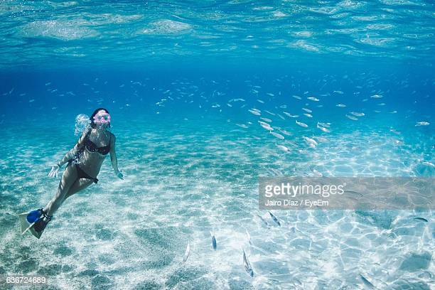 Woman Snorkeling Undersea With Fishes