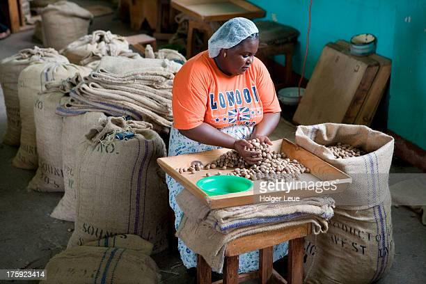 Woman sorts nutmegs