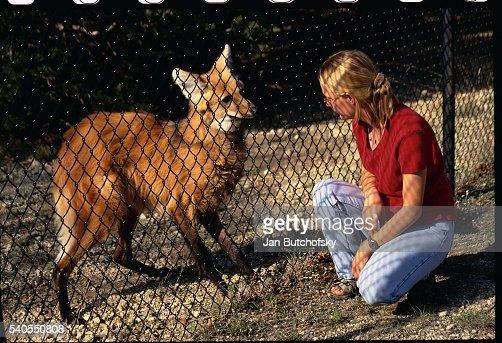 Woman Squatting Beside a Brazilian Maned Wolf