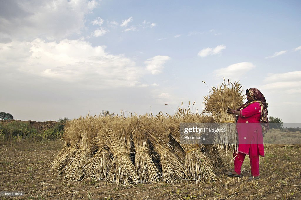 A woman stacks bundles of wheat during a harvest in the Chakwal district of Punjab province, Pakistan, on Saturday, May 4, 2013. Pakistan wheat output to increase this year, the U.S Department of Agriculture's Foreign Agricultural Service said in a report posted today on its website on April 4. Photographer: Asad Zaidi/Bloomberg via Getty Images