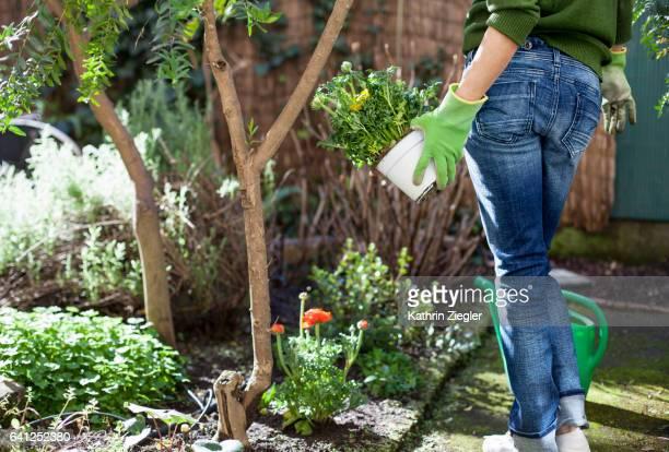 Woman standing in backyard, holding flowerpot with buttercups