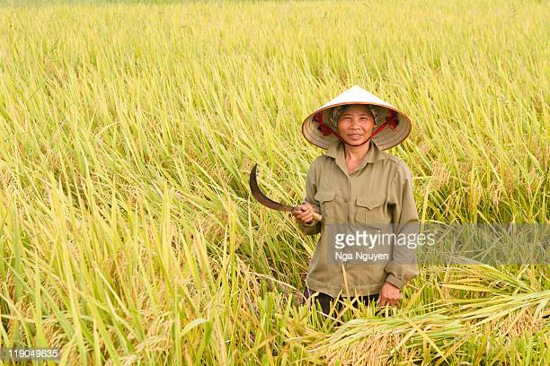 Woman standing in rice field
