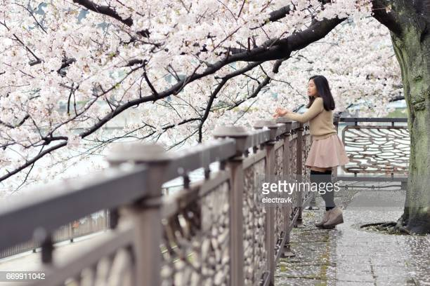 Woman standing under cherry blossoms