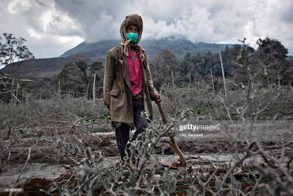 A woman stands in her field, which has been covered by ash from the eruption of mount Sinabung in Sigarang Garang village on November 25, 2013 in Karo district, North Sumatra, Indonesia. Mount Sinabung, which has been intermittently erupting since September, erupted eight times in just a few hours on Sunday. Officials have reported of rocks raining down over a large area, forcing thousands to flee their homes. The Indonesian government has called for people living within five kilometres (3.1 miles) of the volcano, on the northern tip of Sumatra Island, to evacuate their homes as the volcanology agency raised the alert level for the volcano to the highest point on a four-stage scale.