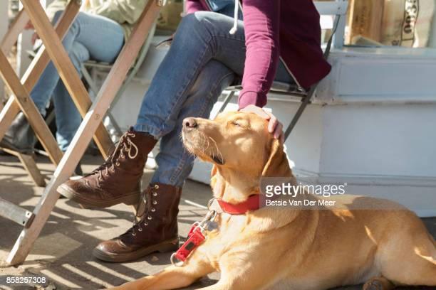 Woman strokes Labrador retriever in outdoor cafe.