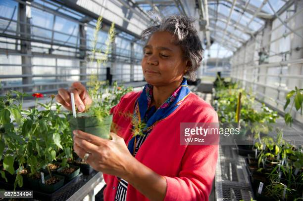 Woman studying plants in a greenhouse