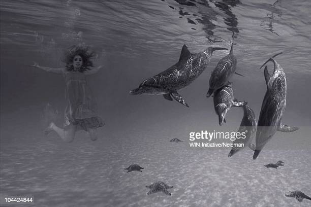 Woman swimming with dolphins in the sea, Republic of Ireland