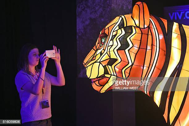 A woman takes a photo of a giant Sumatran tiger light installation at the launch of Vivid Sydney in Sydney on March 17 2016 Vivid Sydney is the...