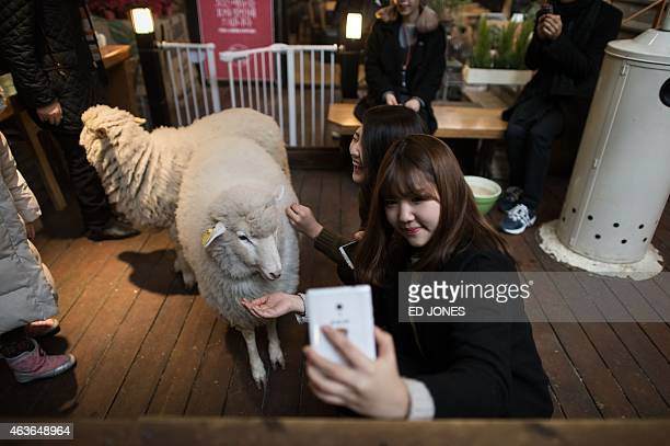 A woman takes a selfie with a sheep at a sheep cafe in Seoul on February 17 2015 Asia will mark the lunar new year of the sheep on February 19 AFP...