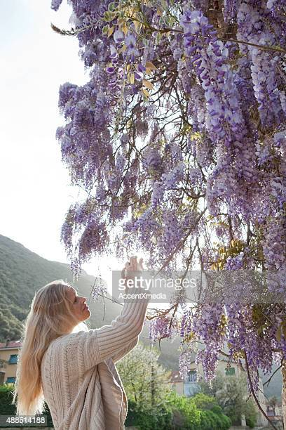 Woman takes picture of wisteria blossoms against stone wall
