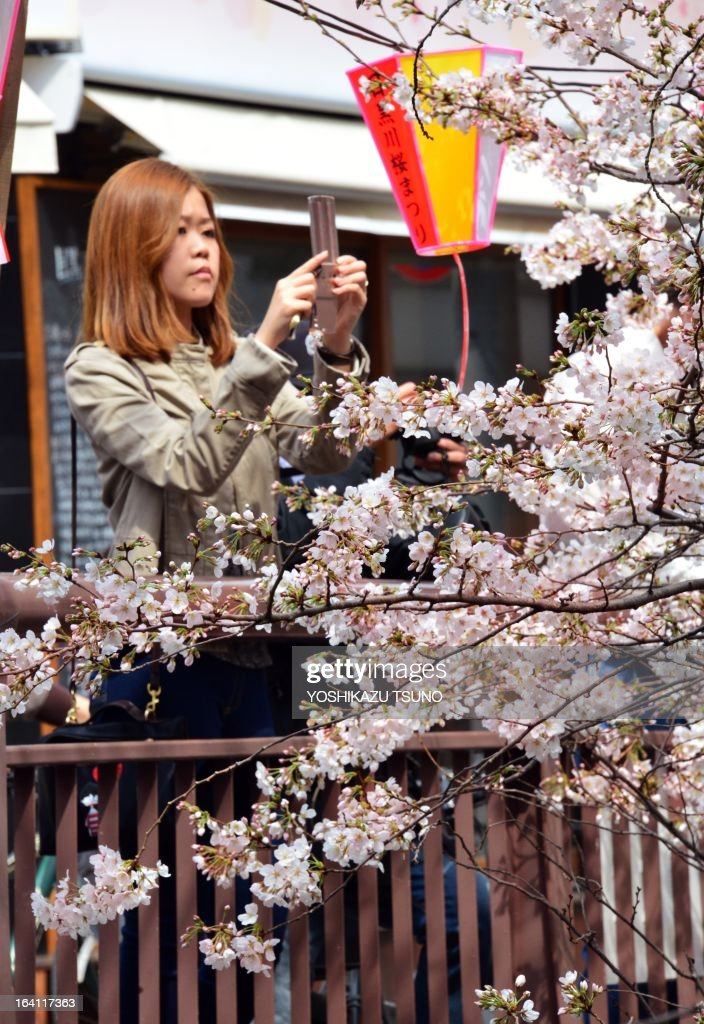 A woman takes pictures of cherry blossoms with her mobile phone in Tokyo on March 20, 2013. Viewing of cherry blossoms is a national pastime and cultural event in Japan, where millions of people turn out to admire them annually. Japan's weather agency announced on March 16 the official beginning of cherry blossom season in Tokyo, equalling the record for the earliest ever start. AFP PHOTO / Yoshikazu TSUNO