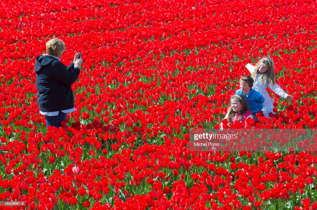A woman takes pictures of her children in the flower fields on April 13, 2014 in Noordwijkerhout, Netherlands. The fields are in bloom early this year due to the very mild winter and tourists from all over the world flock to the so called bulb area and the Keukenhof Flower Park to enjoy the colourfull fields of blooming tulips and a wide range of other flowers. (Photo Michel Porro/Getty Images).