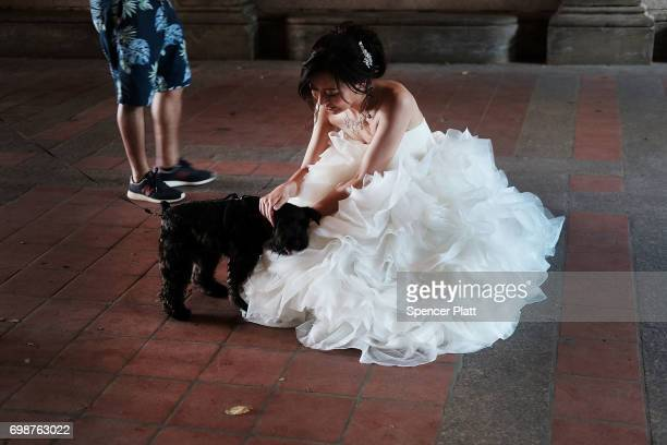 A woman taking bridal pictures pets a dog in Manhattan's Central Park on a hot afternoon on June 20 2017 in New York City Summer will officially...