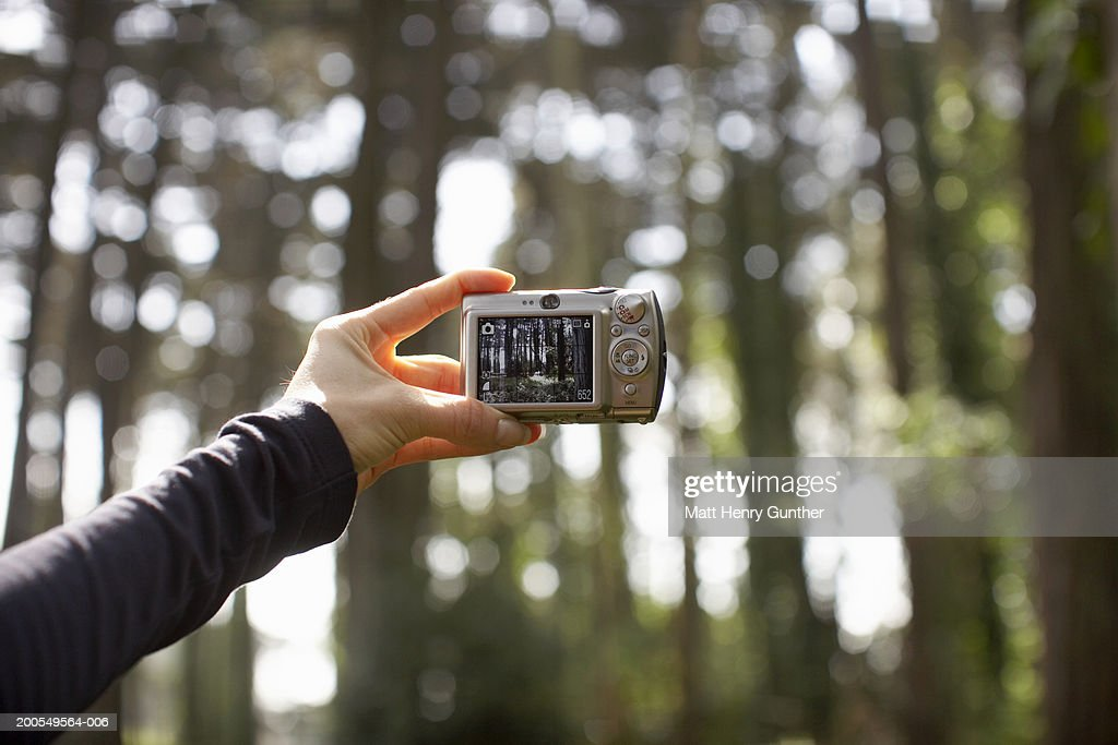 Woman taking photo in  woods : Stock Photo