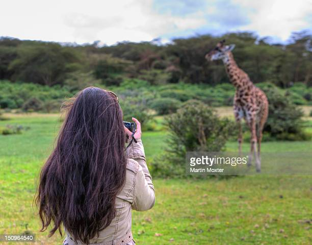 Woman taking picture of a Masai giraffe (Giraffa camelopardalis tippelskirchi), Lake Naivasha, Kenya