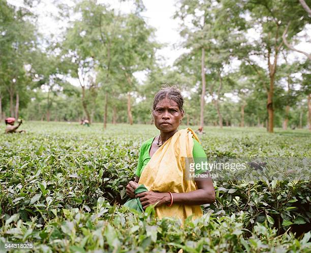 Woman tea picker