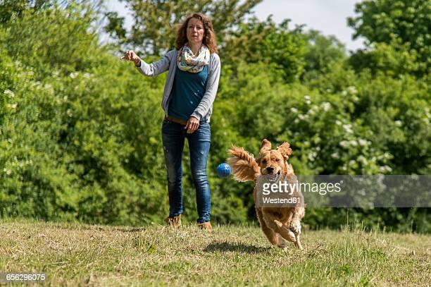 Woman throwing ball, golden retriever running on meadow