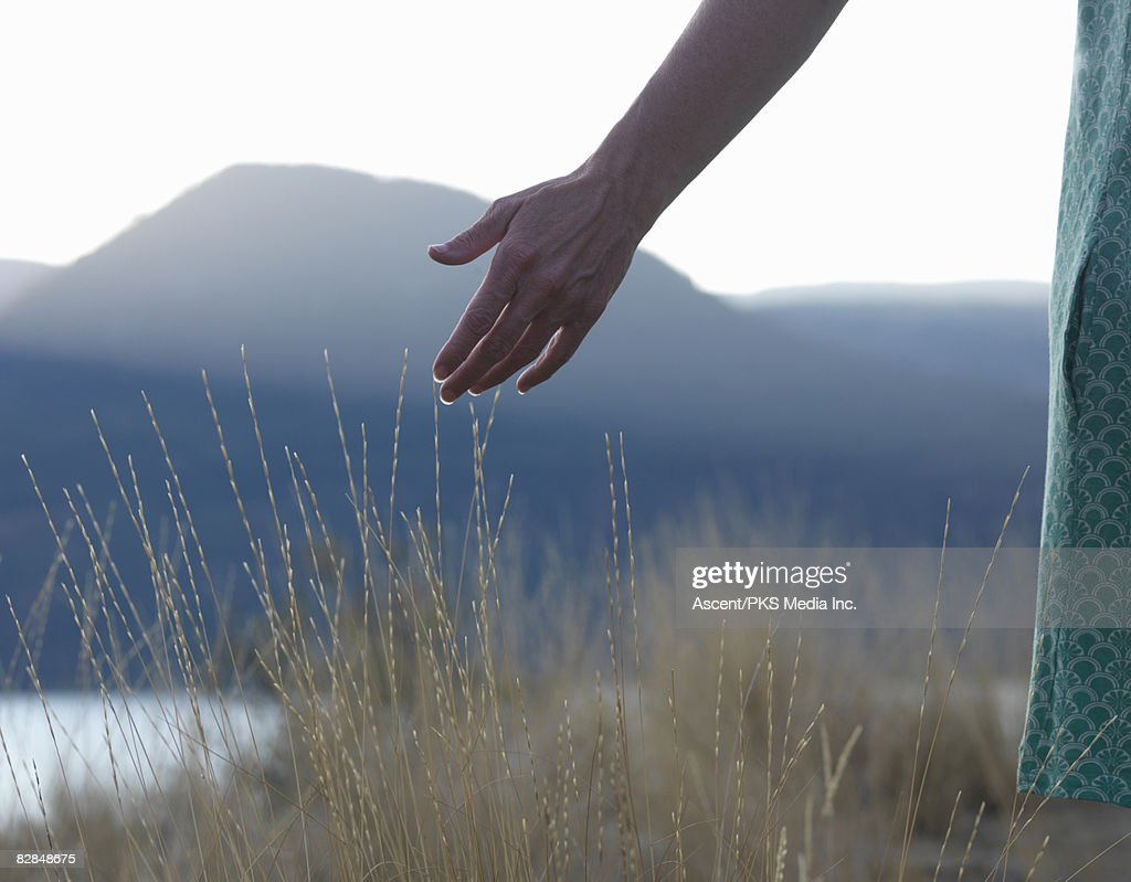 Woman touches dry grasses above lake at sunset : Stock Photo