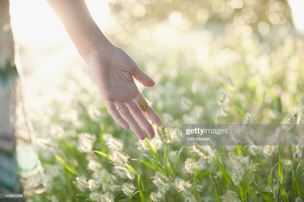 Woman touching stalks in wheatfield : Stock Photo