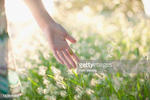 Woman touching stalks in wheatfield : Stock Photo