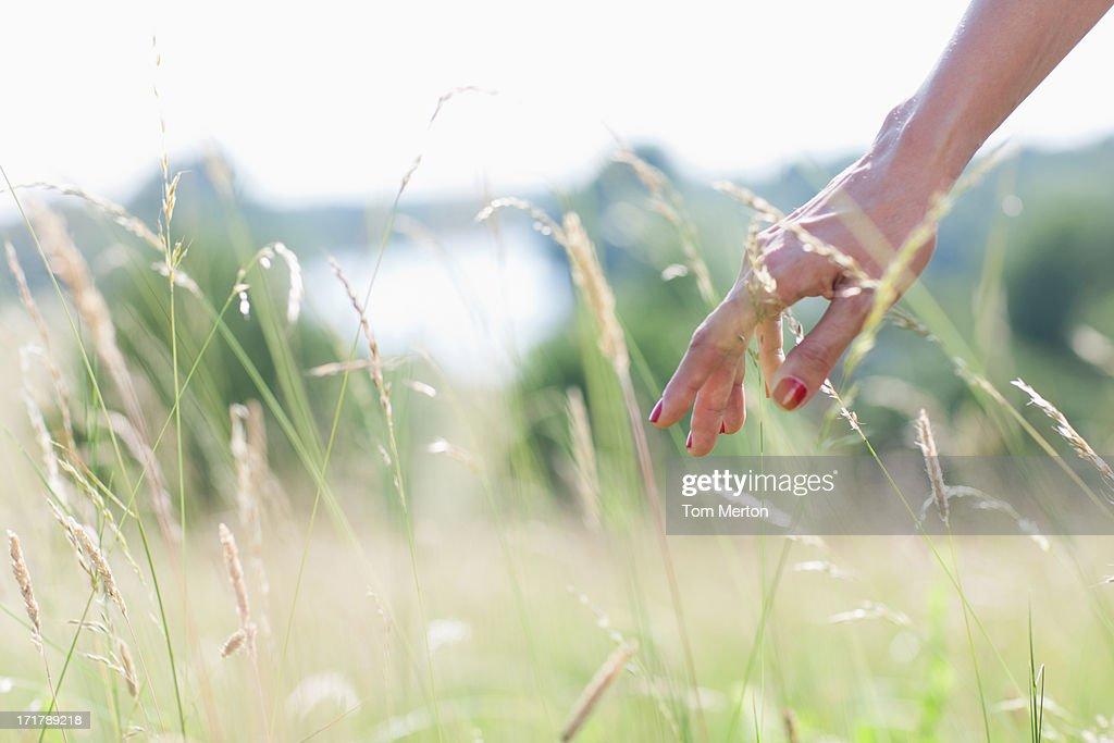 Woman touching tall grass : Stock Photo