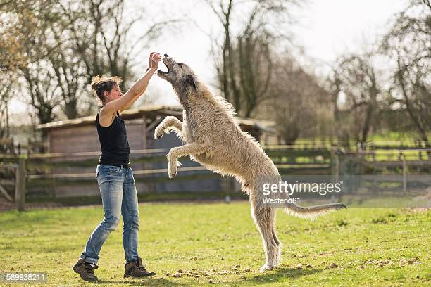 Woman training Irish Wolfhound on a meadow