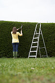 Woman trimming hedge with hedge clippers, rear view