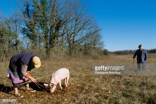 Woman Truffle Farming With Pig