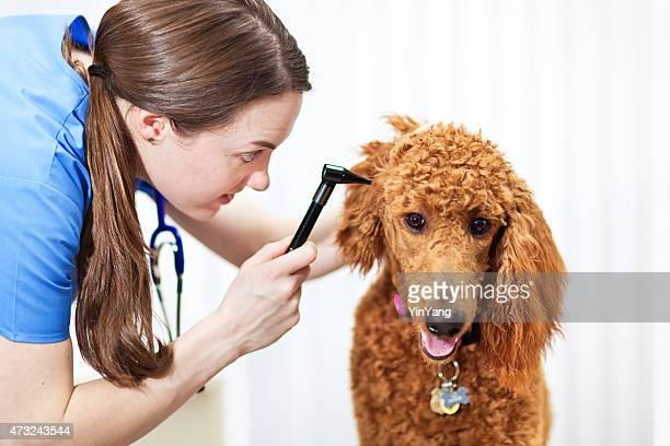 Woman Veteranian Examining Pet Dog in Animal Clinic