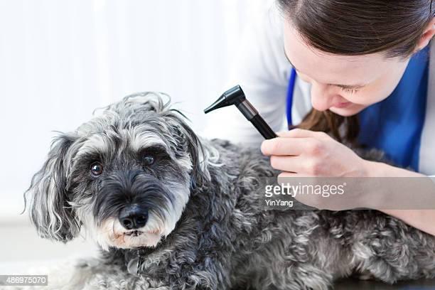 Woman Veterinarian Examining Pet Dog in Animal Clinic
