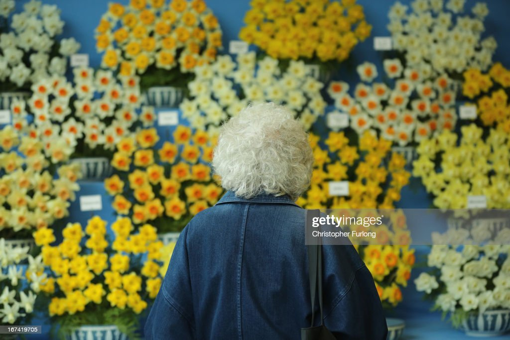 A woman views a display of daffodils on show at the Harrogate Spring Flower Show on April 25, 2013 in Harrogate, England. Over 100 nurseries are staging displays of their flowers and plants at the Harrogate Spring Show organised by the north of England Horticultural Society. The premier gardening event of the north attracts thousands of horticulturalists to view it's show gardens and Spring floral displays.