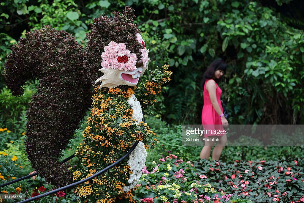 A woman views the floral display at the Sentosa Flowers exhibition at Palawan Beach on February 11, 2013 in Singapore. Millions of spring flowers decorate the island in celebration of the Chinese New Year, the year of the Snake.