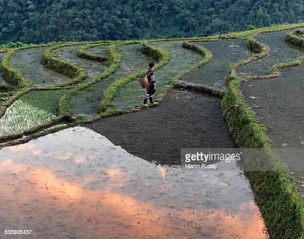 Woman walking along rice terrace at sunset
