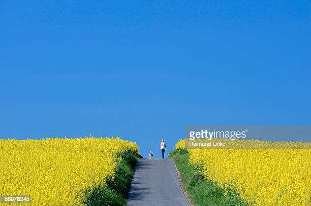 Woman walking dog in rapeseed fields