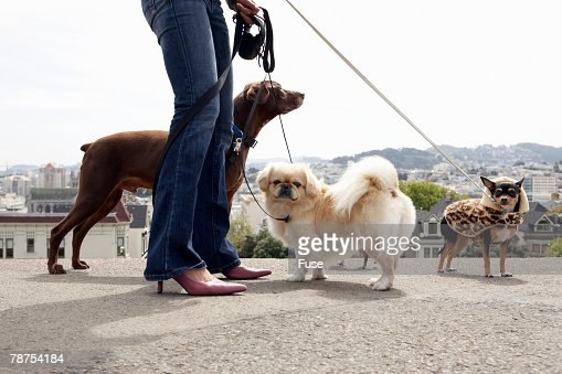 [Image: woman-walking-dogs-picture-id78754184?s=170667a]