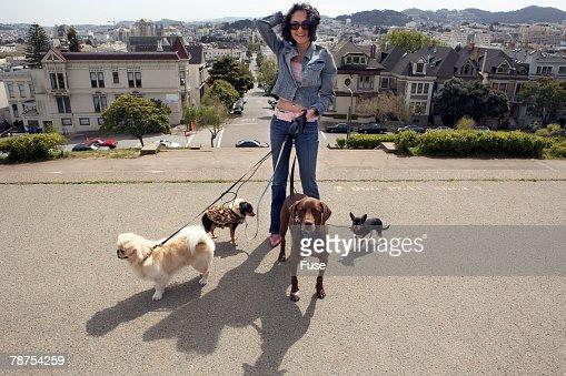 Woman Walking Dogs : Stock Photo