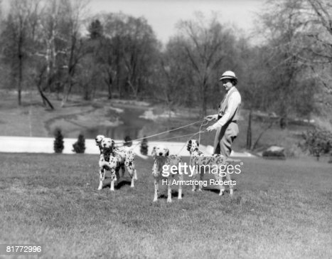 Woman Walking Four Leashed Dogs Dalmation Spots On Lawn Of Park Or Country Estate Pond Spring Trees Upscale Tatoo Kennels Hatboro Pa. : Stock Photo