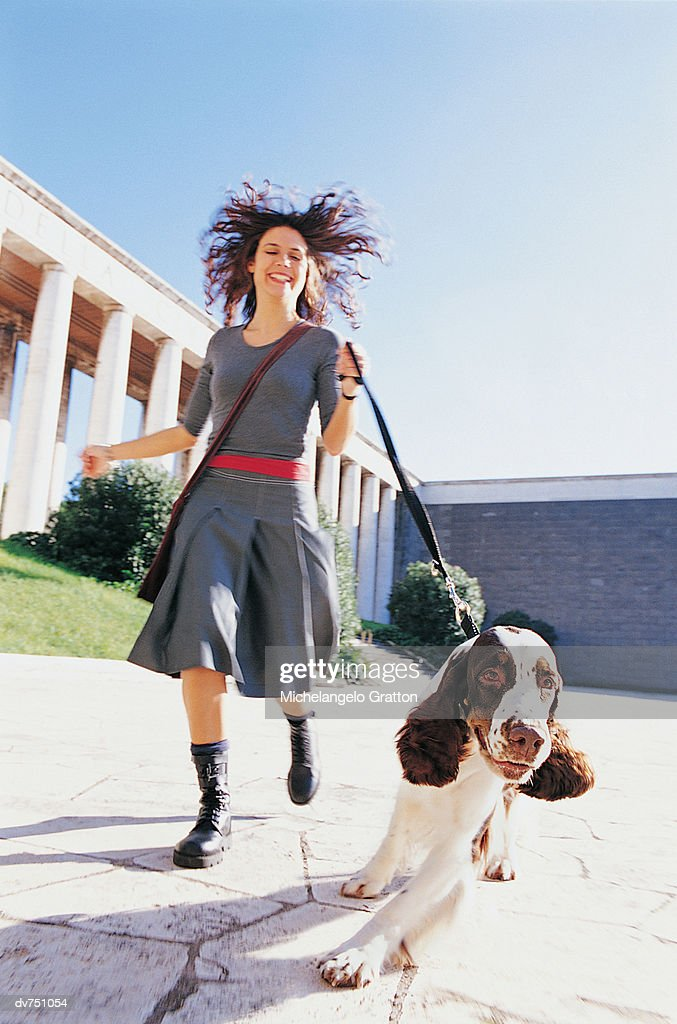 Woman Walking Her Springer Spaniel : Stock Photo