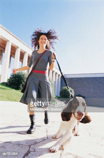 Woman Walking Her Springer Spaniel : ストックフォト