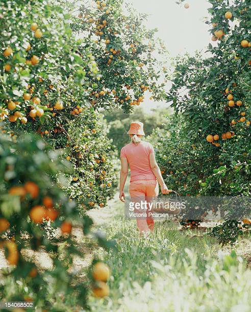 Woman walking in orange grove with basket.