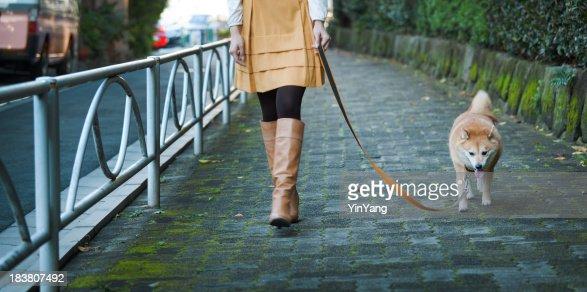 Woman Walking Leashed Shibu Inu Dog On Tranquil ...