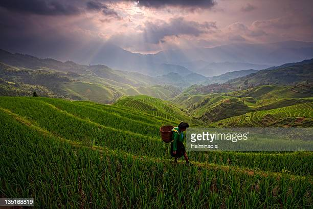 Woman walking on rice field at sunrise