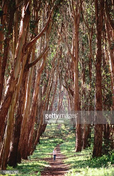 Woman walking through eucalyptus trees, the Presidio.