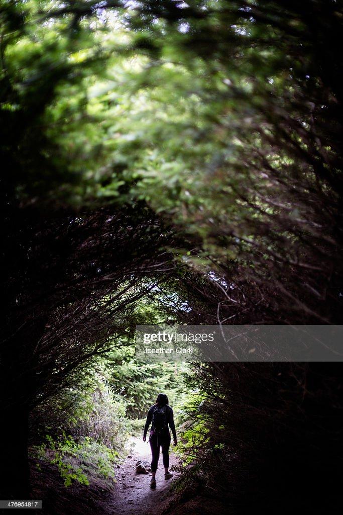 Woman walking through trees : Stock Photo